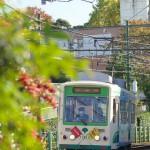 【Tokyo Train Story】秋の実(都電荒川線)