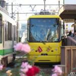 【Tokyo Train Story】三ノ輪橋電停の秋のバラ(都電荒川線)