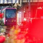 【Tokyo Train Story】バラ色の世界(都電荒川線)