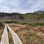 栂池自然園の最奥部にある標高約2000mの展望湿原から白馬の大雪渓を望む 『秋の紅葉を愛でる長野旅行』 その16