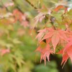 松本市内の四柱神社の紅葉と翁堂のたぬきケーキ 『秋の紅葉を愛でる長野旅行』 その21