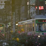【Tokyo Train Story】夕暮れ時のバラ咲く電停(都電荒川線)