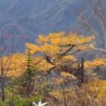 栂池高原の紅葉・黄葉風景をこれでもかというくらい満喫する 『秋の紅葉を愛でる長野旅行』 その17