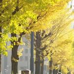 今週の365 DAYS OF TOKYO(12月15日~12月21日) ~ 丸の内と谷中の秋の景色