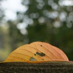 今週の365 DAYS OF TOKYO(12月22日~12月28日) ~ 谷中と上野の秋の景色