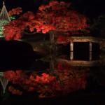 Nikon 1 V1 + 1 NIKKOR 32mm f1.2で六義園の紅葉ライトアップを撮影してみた その2(最終回)