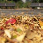 佃堀広場の秋の景色 『佃・月島・築地 #AMNフォトウォーク 』 その4