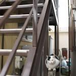 今週の365 DAYS OF TOKYO(1月12日~1月18日) ~ 荒川区のネコたち