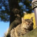 今週の365 DAYS OF TOKYO(1月5日~1月11日) ~ 上野と谷中の秋の終わりの風景