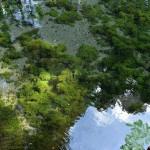白川水源から湧き出る水のあまりの透明度に感動した話 『くまもと鉄分補給日記の旅』 その5 #鉄道くまもと