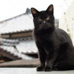 御所浦島で出会ったネコ6匹と食堂松苑での刺身定食 『くまもと鉄分補給日記の旅』 その28 #鉄道くまもと