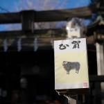 今週の365 DAYS OF TOKYO(2月9日~2月15日) ~ 日暮里と谷中のネコたち