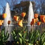 今週の365 DAYS OF TOKYO(2月16日~2月22日) ~ 上野公園と素盞雄神社