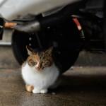 天草の本渡の路地裏で8匹のネコたちを撮影する 『くまもと鉄分補給日記の旅』 その26 #鉄道くまもと