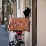 今週の365 DAYS OF TOKYO(3月9日~3月15日) ~ 谷中の冬のネコたち