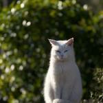 今週の365 DAYS OF TOKYO(3月16日~3月22日) ~ 夕やけだんだんのネコたち