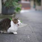 今週の365 DAYS OF TOKYO(3月23日~3月29日) ~ マニュアルレンズで荒川区の風景を撮る