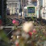 【Tokyo Train Story】白とピンクのバラの花を前ボケに(都電荒川線)