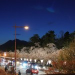 青森県弘前の桜が満開の美しい風景 平成26年(2014年)の桜を写真と動画で振り返ってみる