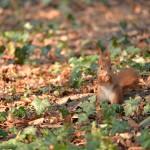 ヴィースバーデンのクアパークで出会った動物たち。リスが可愛すぎる! 『ドイツ路地裏散歩の旅』 その19 #ANAxトラベラーズ