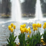 今週の365 DAYS OF TOKYO(4月6日~4月12日) ~ 谷中と上野の春の始まり