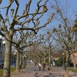 中心街を離れて緑豊かなヴィースバーデンのクアパークを散策してみる 『ドイツ路地裏散歩の旅』 その18 #ANAxトラベラーズ