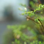 今週の365 DAYS OF TOKYO(5月11日~5月17日) ~ 雨上がりの荒川区の風景