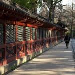 今週の365 DAYS OF TOKYO(5月25日~5月31日) ~ 根津と谷中の春