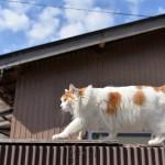千葉県館山の町中で神々しい空気をまとったネコに出会う 『冬の南房総の旅』 その2