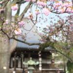 今週の365 DAYS OF TOKYO(6月8日~6月14日) ~ 谷中と上野の春の終わりに