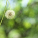 今週の365 DAYS OF TOKYO(6月15日~6月21日) ~ 花咲く湯島天神の風景