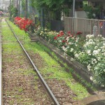 【Tokyo Train Story】バラの道(都電荒川線)