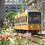 【Tokyo Train Story】黄色い電車とバラの花(都電荒川線)
