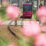 【Tokyo Train Story】ピンクな世界(都電荒川線)