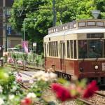 【Tokyo Train Story】都電荒川線レトロ車両のバラ号
