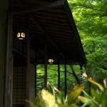 アジサイ、菖蒲、ホタルブクロが咲く旧古河庭園のしっとりとして落ち着いた空間を楽しんできた