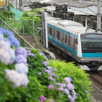 【Tokyo Train Story】紫陽花と京浜東北線