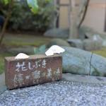 千葉県館山にある温泉宿の花しぶきで日帰り入浴をしてみる 『冬の南房総の旅』 その3
