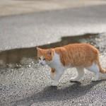 千葉県の岩井で出会った元気な3匹のネコたち 『冬の南房総の旅』 その10