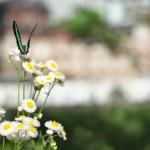 今週の365 DAYS OF TOKYO(6月29日~7月5日) ~ 新緑の靖国神社