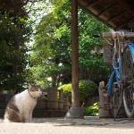 今週の365 DAYS OF TOKYO(7月13日~7月19日) ~ 春の谷中のネコたち