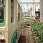 【Tokyo Train Story】線路際のバラ(都電荒川線)