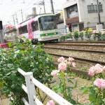 【Tokyo Train Story】ピンクの薔薇が咲く都電の線路際
