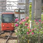 【Tokyo Train Story】ピンクの荒川車庫前電停(都電荒川線)