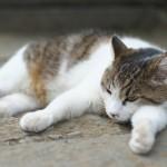 今週の365 DAYS OF TOKYO(7月20日~7月26日) ~ 春の谷中のネコたち