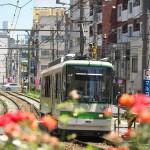 【Tokyo Train Story】バラが咲くS字カーブ(都電荒川線)
