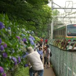 【Tokyo Train Story】紫陽花が咲き誇る小路の横を走り抜ける湘南新宿ライン