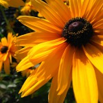 MADOSMAは花などの近くのものを撮影するのが得意かも MADOSMAで撮影した写真をいくつか紹介 #madosma