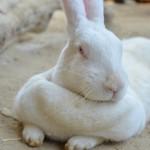 千本松牧場のどうぶつふれあい広場でウサギやヤギと触れ合ってみた 『塩原元湯温泉大出館の旅』 その12