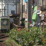 【Tokyo Train Story】夏のバラ(都電荒川線)